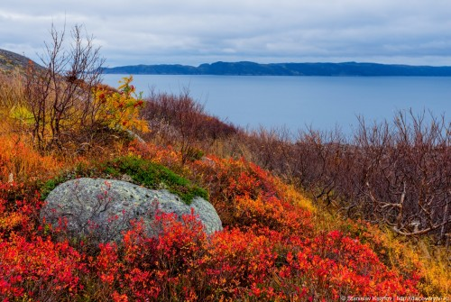 Fall-colors-of-the-tundra-00.jpg