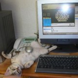 funny_cats_10