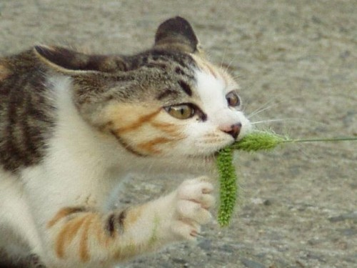 funny cats 34